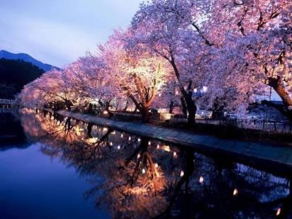 Japan in spring 6